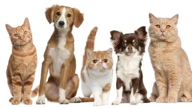 Cuidados básicos para las mascotas
