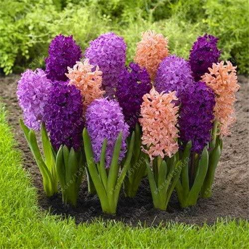 Flores para dar la bienvenida a tu casa