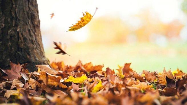¡Llega el otoño!… y sus curiosidades